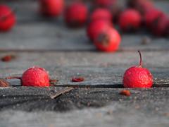 Copenhagen 2017 (hunbille) Tags: copenhagen københavn denmark harbour islandsbrygge islands brygge quay berries berry fotocompetitionsilver