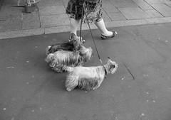 Paris (ulf.bjerre) Tags: paris dogs bw 2008 reportage bastilleday