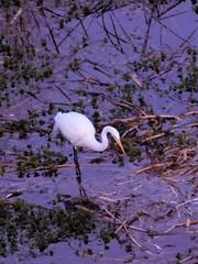 bird (just me julie) Tags: bird tempe arizona az water