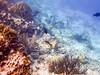 Underwater scene (Chalto!) Tags: fish sea swimming snorkeling snorkelling underwater bonaire abcislands dutchantilles westindies caribbean netherlandsantillies sponge gorgonian