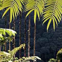 Jardin de Balata, Martinique (pom'.) Tags: canoneos400ddigital jardindebalata martinique 972 francedoutremer dromcom antilles france europeanunion palmtree fortdefrance 2010 february