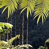 Jardin de Balata, Martinique (pom.angers) Tags: canoneos400ddigital jardindebalata martinique 972 francedoutremer dromcom antilles france europeanunion palmtree fortdefrance 2010 february