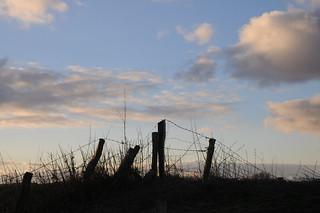 Weidezaunpfähle vor dem Abendhimmel; Wohlde, Stapelholm (4)