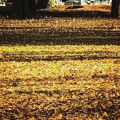 落ち葉のカーペット Fallen leaves carpet #落ち葉 #落葉 #小金井公園 #公園 #紅葉 #冬 #iphone7plus #iphoneカメラで撮る世界… instagram.com/p/BOif9hdD0Dq/ (tsukataiphoto) Tags: 落ち葉 落葉 小金井公園 公園 紅葉 冬 iphone7plus iphoneカメラで撮る世界