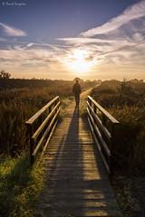 The Walker II. (dasanes77) Tags: canoneos6d canonef1635mmf4lisusm tripod landscape goldenlight naturallight nature selfportrait dawn sunrise sun cloudscape clouds horizon bridge wood valencia marjaldelmoro sagunto