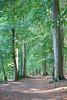 Beech Forest (Stuart Borrett) Tags: forest germany igb neuglobsow ecsa56 path trail tree beech lakestechlin fagussylvatica plant ecology nature
