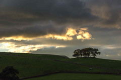 DSC- 0021 - Dusk in the Dales (SWJuk) Tags: swjuk uk unitedkingdom gb britain england yorkshire northyorkshire yorkshiredales dales wensleydale gayle hawes trees copse hills hillside fields farmland drystonewalls sky skies clouds sunset gaudyhousefarm 2016 sep2016 autumn autumnal outdoor landscape view nikon d7100 nikond7100 18300mm rawnef lightroom countryside evening dusk
