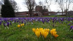 Frühling :-) (Gartenzauber) Tags: park natur krokus sony saariysqualitypictures floralfantasy doublefantasy