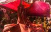 Transgender celebrating Holi series @ Nandgaon,Mathura. (Vijayaraj PS) Tags: holi colours springfestival india incredibleindia indianheritage asia nikond3200 nikon indianboy action nandgaon mathura uttarpradesh brajholi joy temple surreal people happiness iamnikon festival travelphotography travel red transgender hijra