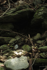 boulders (Molly Des Jardin) Tags: park trees usa rock stone forest moss rocks state pennsylvania stones branches roots rocky boulder boulders lancaster mossy 2014 susquehannock drumore 43215mm
