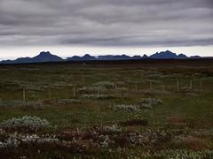 Pingvellir National Park!
