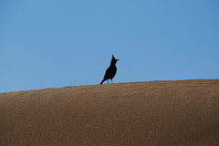 Al Ain (mhbous) Tags: winter bird photography sand friend dubai fuji desert farm dune uae bbq fujifilm alain ain فوجي العين الامارات صحراء xe1 كثبان