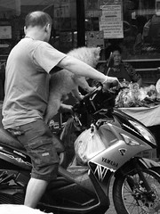 Driving with lovely dog (kawabek) Tags: dog thailand bangkok motorcycle 犬 イヌ 愛犬 タイ オートバイ バイク thonburi バンコク thaibike ธนบุรี กรุงธนบุรี タイバイク
