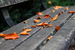 Since You Been Gone (memories of time) Tags: autumn canada leaves vancouver bench coalharbor