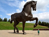 Leonardo Horse   (IMG_6860_P) (from_the_sky) Tags: horse leonardo matchpoint matchpointwinner t470 mpt470