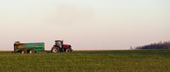Country Air (Twitter: @DriedgerDan) Tags: blue tractor ontario field farm smell manure odour