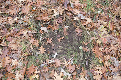 Deer Scrape (GSankary) Tags: fall farm farms ruralscenes farmscenes