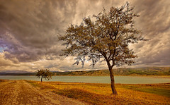 The two loners (* landscape photographer *) Tags: sunset italy lake tree nature colors clouds europe flickr tramonto nuvole natura sa sasi vivi colori paesaggio salvo 2015 respiro tranquillit creazione landscapephotographer salvyitaly seniselagodimontecotugno