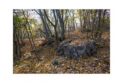 2 (Emilio Faienza) Tags: landscape italia fuji natura fujifilm autunno paesaggio abruzzo bosco chieti foresta passeggiata atessa pallano tornareccio fujinon18f2 fujifilmxe2 fujitalia fujinon35f14r