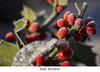 #246 (Les photographies de Marina) Tags: nature hauteloire hautallier myhauteloire myauvergne
