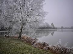 #AM La Chapelle-d'Angillon en habits divers (Thierry.Vaye) Tags: lachapelledangillon étang eau froid givre glace château banc lapetitesauldre rivière