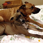 Bella and Juniper on the bed thumbnail