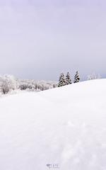 ''Les Rois!'' (pascaleforest) Tags: neige snow hiver winter matin paysage landscape passion nikon nature sapin forest fôret ciel sky nuage cloud sigma québec canada wood arbre art couleur color