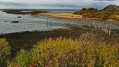 bassin arcachon (CLAUDE ROUGERIE) Tags: sunset beach water sky flower red nature blue night tree green flowers light sun clouds park landscape sea city trees lake river news garden bassin arcachon hourtin andernos claude rougerie