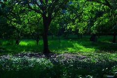 Bajo los Arboles (Carlos Durán Photography/CAD) Tags: sombra arboles verde green parque park miradorsur santodomingo carlosduran republicadominicana rd three