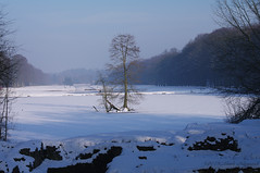 Winter (Natali Antonovich) Tags: winter tervuren belgium belgie belgique snow frost nature christmas christmasholidays landscape park tree