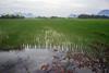 (kuuan) Tags: manualfocus mf ltm m39 canon rangefinder f2 35mm 235 f235mm canonltmf235mm ilce7 alphaa7 a7 myanmar mawlamyine mawlamyaing moulmein hpaan landscape ricefield
