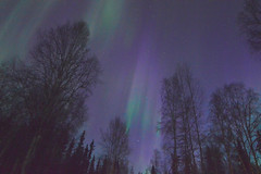 Curtains Of Auroras (Rebeak) Tags: rebeak alaska auroraborealis auroras nature night northernlights northpolealaska silhouette stars sky purple green explore