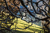 last day wolgangsee unbenannt-9754  ISO 50_ (ernst.scherr) Tags: wolfgangsee strobl salzkammergut salzburg stwolfgang winter see schnee berge