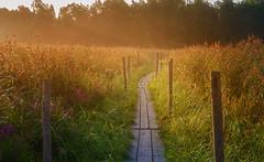 Morning Walk (eklantti) Tags: helsinki finland lammassaari morning light sunrise mist dew beautiful dawn nature landscape