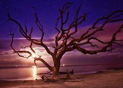 Midnight On Driftwood Beach (Tammy Cook/ Photography) Tags: landscapes nightscapes nature sky georgiacoast jackyllislandstatepark stars seascapes tree