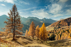 Shaft (S l a w e k) Tags: dolomites italy italian alps alpine meadow autumn sunny day morning valley yellow larch trees scenic dramatic landscape scenery belluno veneto countryside picturesque mountains mountainous