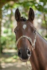 Wemmel : Jaarmarkt, championship for horses #8 (foto_morgana) Tags: animals belgie belgique belgium belgië cheval horse jaarmarkt2016 mammalia mammals mammifères outdoor paard säugetiere wemmel zoogdieren