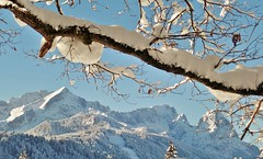 Garmisch Partenkirchen (adr.vesa) Tags: winter snow mountains berg trees