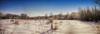Frozen State (flashfix) Tags: january022017 2017 2017inphotos nikond7000 nikon ottawa ontario canada 40mm panorama winter trees frost snow winterscape landscape merbleue jackalopeprancingthroughtheliquorcabinet fence field treeline thereare8jackalopesinthispicturetrytofindthem