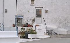 20160502-064549LC-20160502-064616LC-2(2819)_0000 (Luc Coekaerts from Tessenderlo) Tags: cc0 creativecommons 20160502064549lc20160502064616lc228190000 panorama streetview stairs cat telefooncel booth callbox white flowerpot bloempot frontdoor facade architecturalelement gevel public nobody coeluc vak201605rodos vak rodos greece rhodes grc kalavárda kalythies