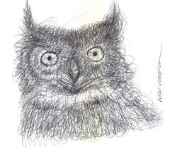 buho a lapicero (ivanutrera) Tags: draw dibujo drawing dibujoalapicero boligrafo animal ave sketch sketching ilustracion owl bird buho wild wildlife lapicero pen dibujoaboligrafo
