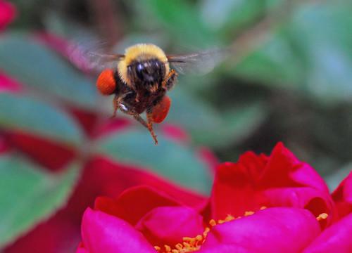 saddle bags -- nature bee pollen bumblebee saddle bags