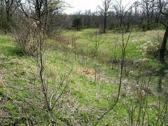 Marais des Cygne Massacre Site
