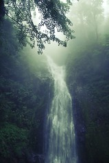 武陵桃山瀑布 (tao-shan waterfall) (i'm Jac) Tags: trip tree green leave nature wet water rain misty fog waterfall nikon rainyday chinese taiwan sigma rainy mysterious 台灣 nikondigital 台中 武陵農場 武陵 30mm wuling wulin 桃山瀑布 煙生瀑布 煙聲瀑布 taoshanwaterfall