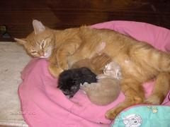 Kitipildid (7) (Siki:)) Tags: cat kass kiisud punane
