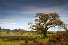 The Pastures (Ray Byrne) Tags: uk england tree castle canon landscape 350d bravo sheep north alnwick northumberland canon350d northern northeast landscapephotography thepastures raybyrne byrneout