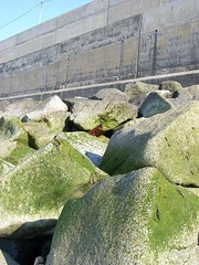 sea defences (norwichrocks) Tags: sea summer green beach rock concrete coast seaside sand waves norfolk pebbles northsea lichen algae sheringham girder sunnyday rustymetal seadefences lightsonstrings norwichrocks