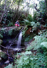 Me at a creek in (what is now) Redwoods National Park (marymactavish) Tags: california usa northerncalifornia creek waterfall scans unitedstates hiking mary trail redwoods ferns nineties 1990s 90s pleaseaddtags prairiecreekstatepark redwoodsnationalpark patrickspointstatepark feelfreetoaddnotes tagatwill pleaseaddtagstomypictures