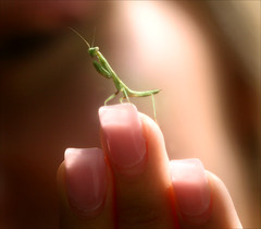 Praying For You (Domain Barnyard) Tags: macro bug mantis insect alien praying canoneos20d prayingmantis tingey domainbarnyard steveirwintribute