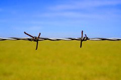 the same horizon (Norma Desmond) Tags: sky field bravo horizon ukraine barbedwire ybp fsftsblog photophilosophy utatafeature utatacd steelybarbs tccomp078 wow